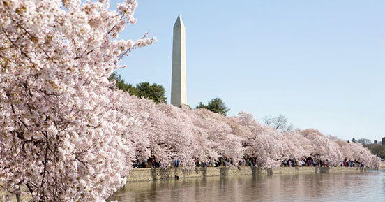 Your Retention Policy, Current… Everywhere - Cherry blossom lake